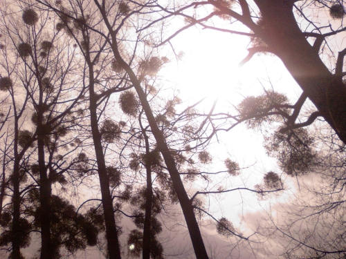 druids-mistletoe-heaven-2-by-aatos-beck-c2a929-3-2009