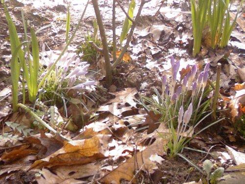 first-flowers-by-aatos-beck-c2a9-20-3-2009